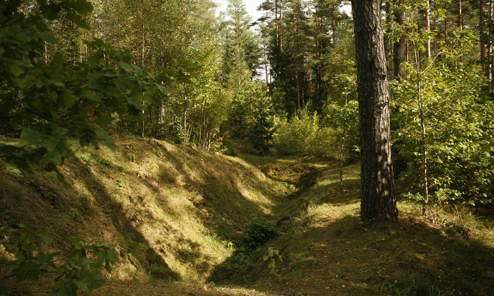 Header Image: Forest near Sabile, Latvia. Photo: Alexandra Klei, September 30, 2017.