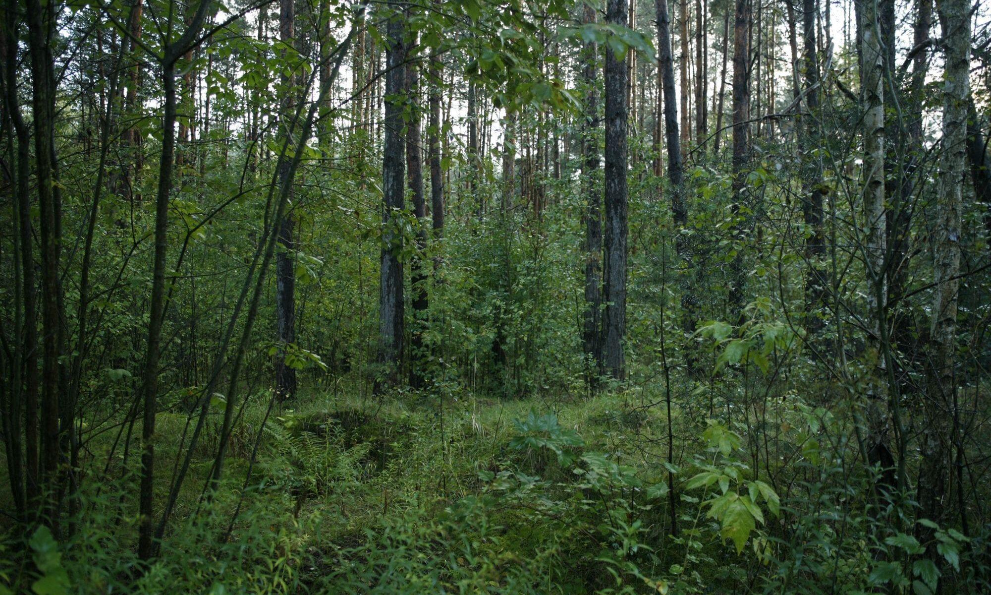 Wald von Blagowschtschina, Belarus. Foto: Alexandra Klei, 22. September 2016.
